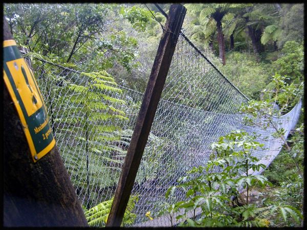 Brücke im Bush